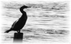 Drakes Island Rentals